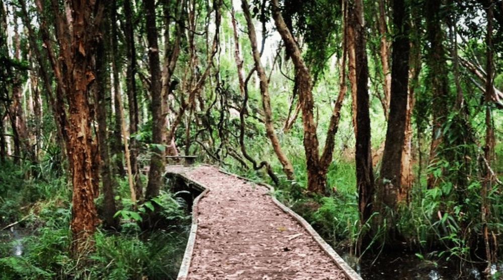 Tree Sanctuary Byron Bay