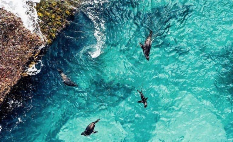 Jervis Bay Marine Park – Travellers Guide (2020)