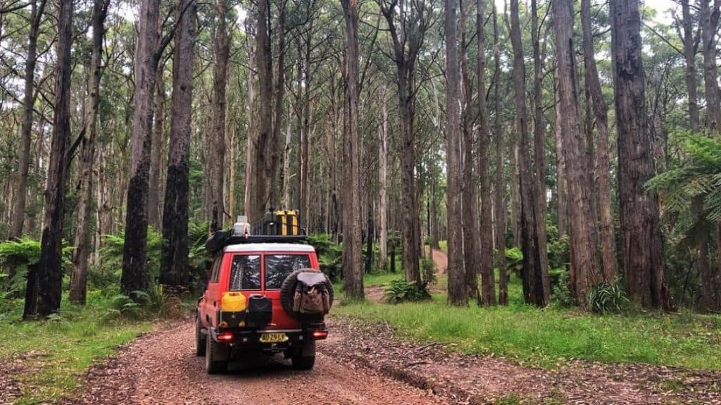 Sharps Track Camping Area
