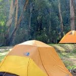 Allenvale Camping Reserve