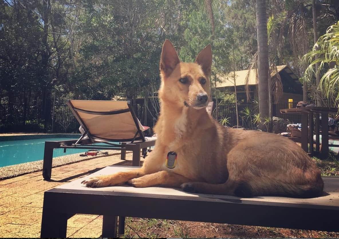 Dog Friendly Accommodation Byron Bay