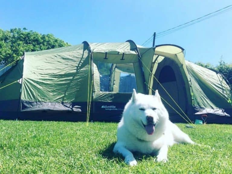 Camping With Dogs: The Ultimate Guide
