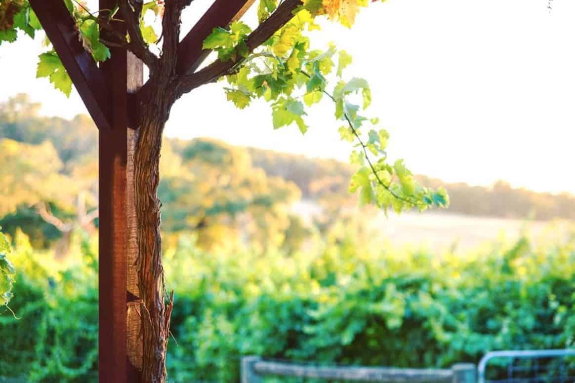 great ocean road wineries