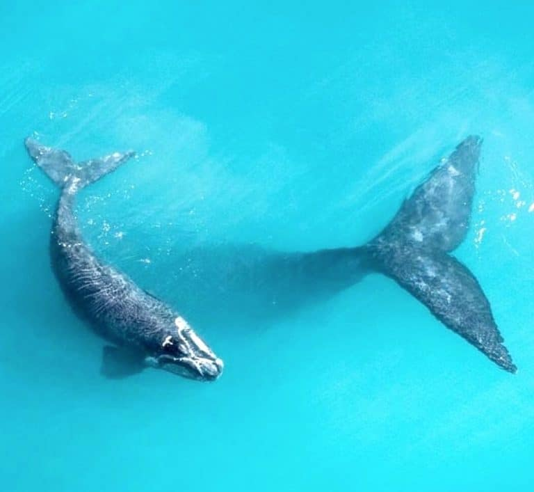 Whale watching Jervis Bay | What you need to know