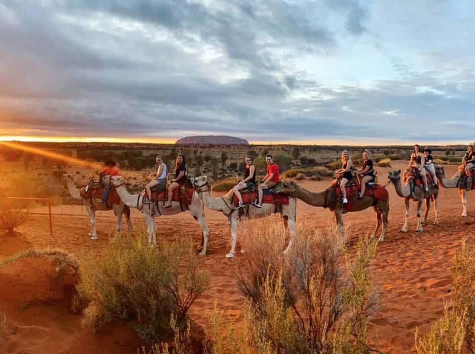 camel tours uluru
