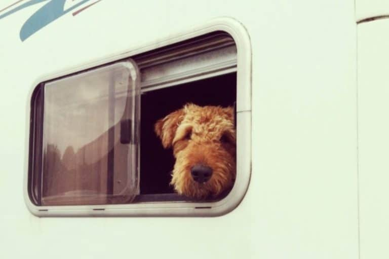 Are dogs allowed in caravan parks?